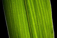 20130808_agriculture_crops_0018