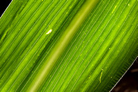 20130808_agriculture_crops_0016