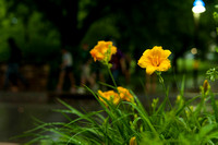 20140605_Campus_Creek_0063