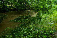 20140605_Campus_Creek_0086